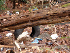 Young Woman's Creek Cleanup is Saturday; Others Planned